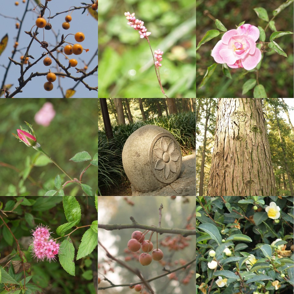 Plants and Objects found around Xihu