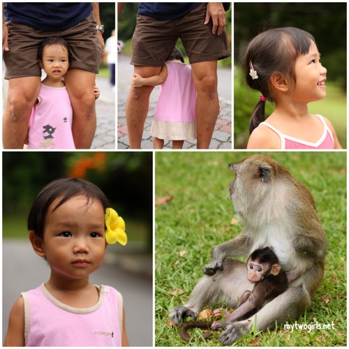 At the Penang Botanical Gardens