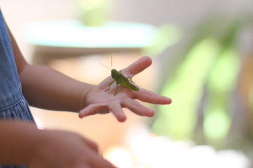 Zaria holding a Grasshopper