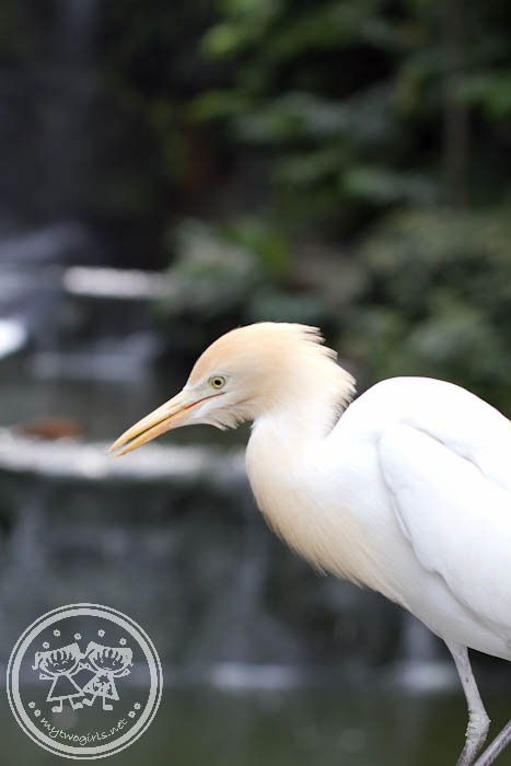 KL Bird Park - Another type of Crane?