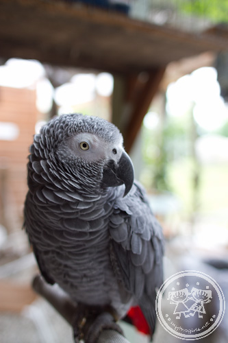 Parrot in To House