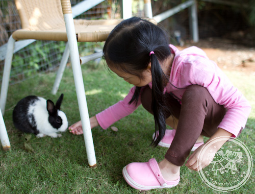 Zaria feeding a rabbit