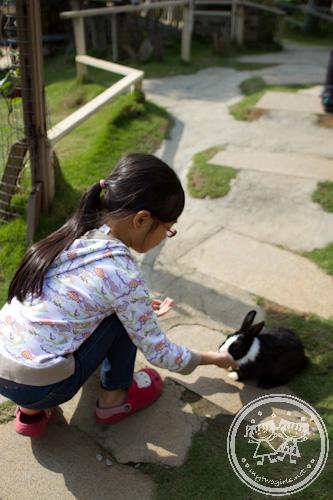 Zara feeding a rabbit