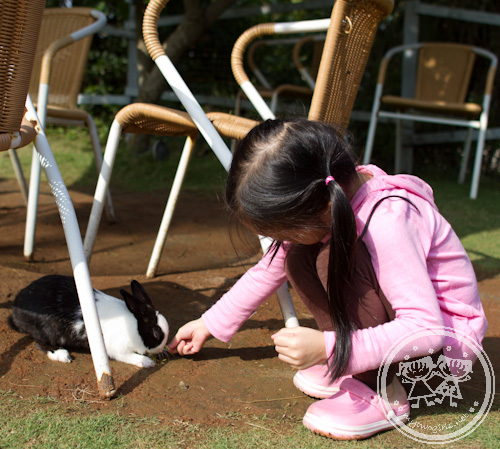 Zaria feeding a rabbit