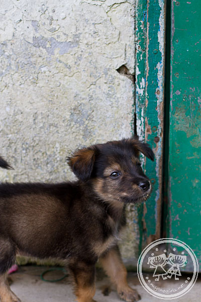 Puppy at Sungai Palas Tea Plantation Workers' Quarters