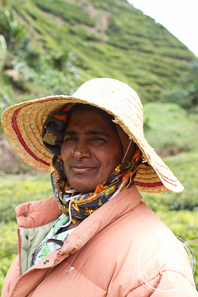 Tea plantation supervisor