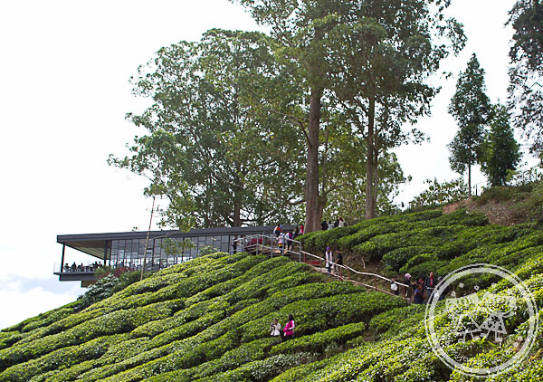 sungai palas tea plantation my two girls all about