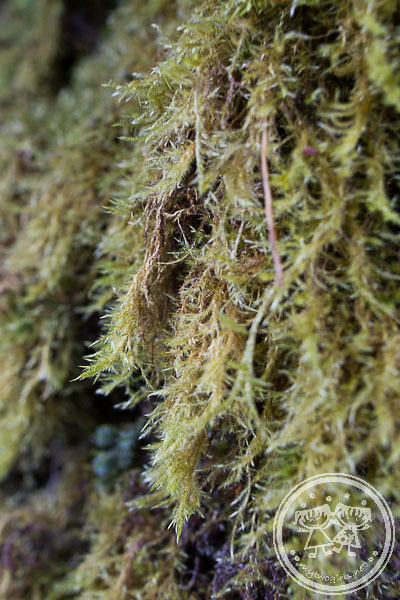 Moss at mossy trail
