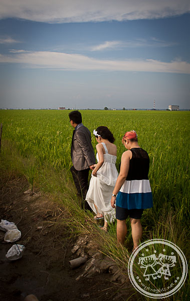 Sekinchan padi field wedding photo