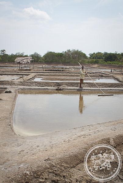 Lombok Salt Farming