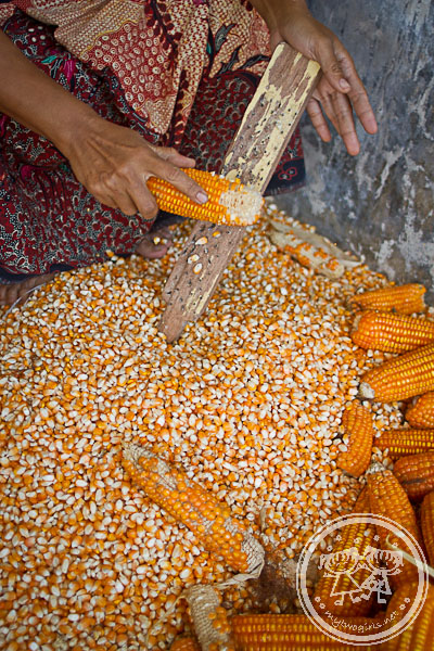 Traditional way of removing corn kernels