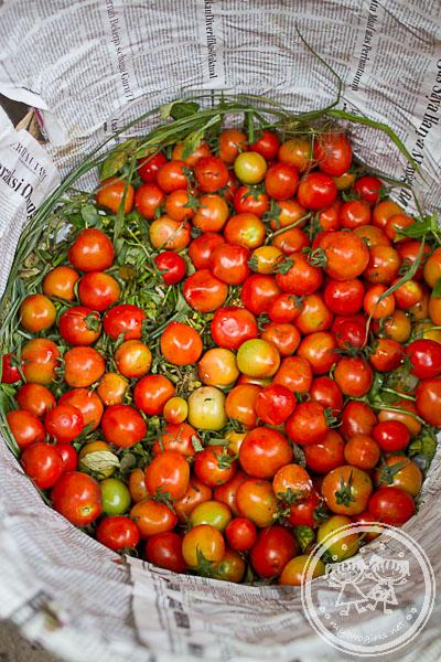 Lombok Tomatoes