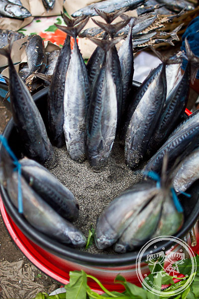 Fresh Mackerel Being Sold At Kebon Roek