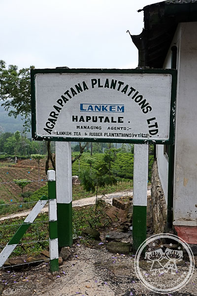 Haputale Tea Plantation Sign