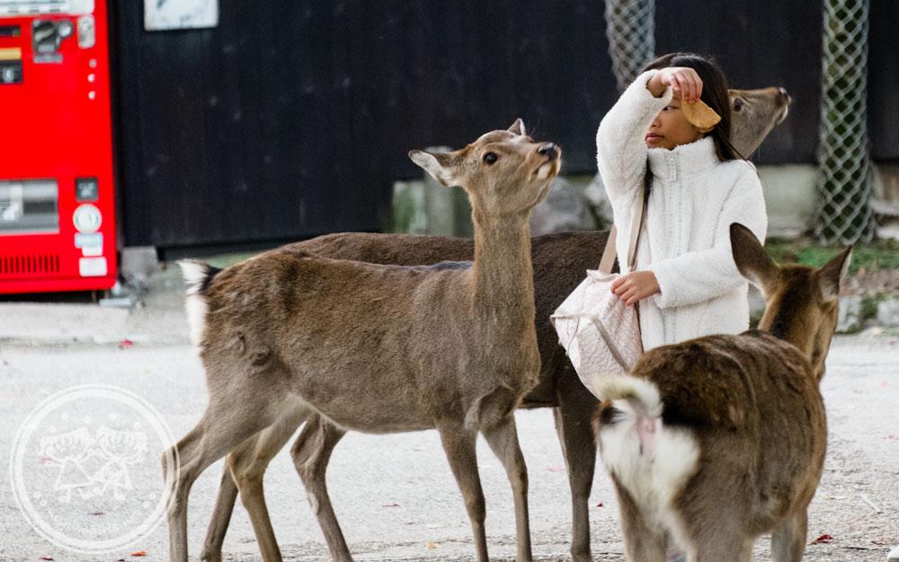 Deers at Nara Park