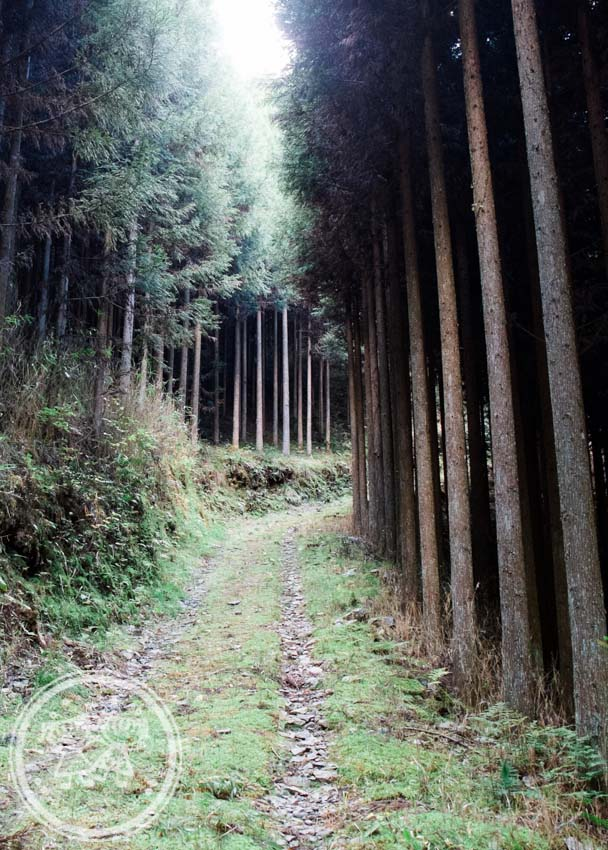 Takao Forest along Tokai Nature Trail