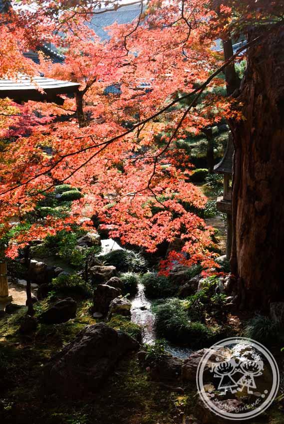 Autumn Leaves View at Daikakuji