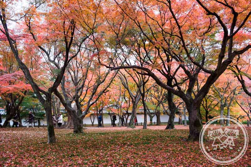 Autumn in Tofukuji