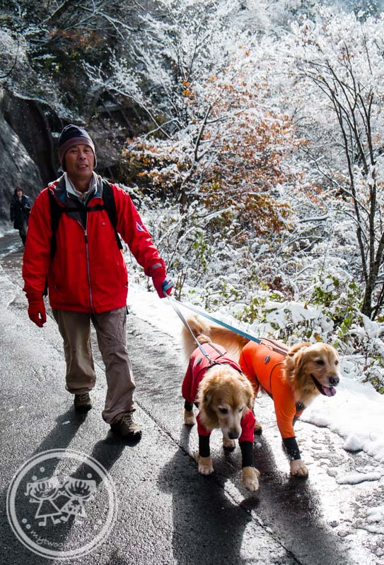 Walking the dog at Ogimachi Village Shirakawa-go