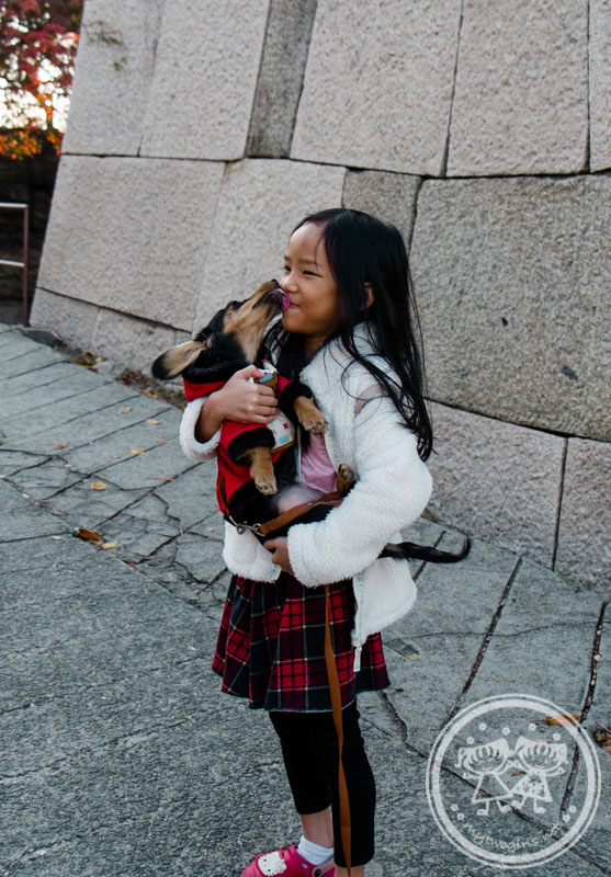 Being kissed by a dog at Osaka Castle Park