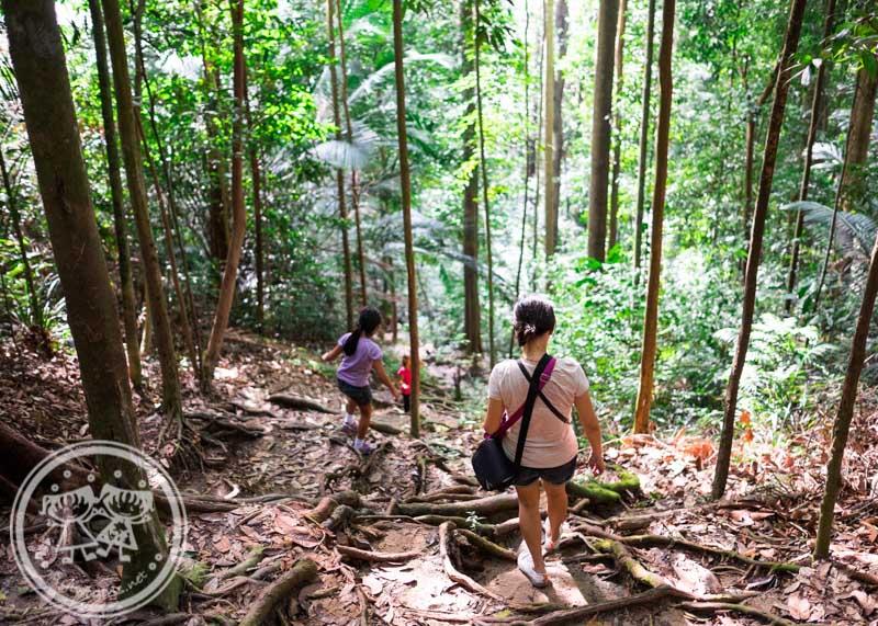 Climbing down Bukit Larut
