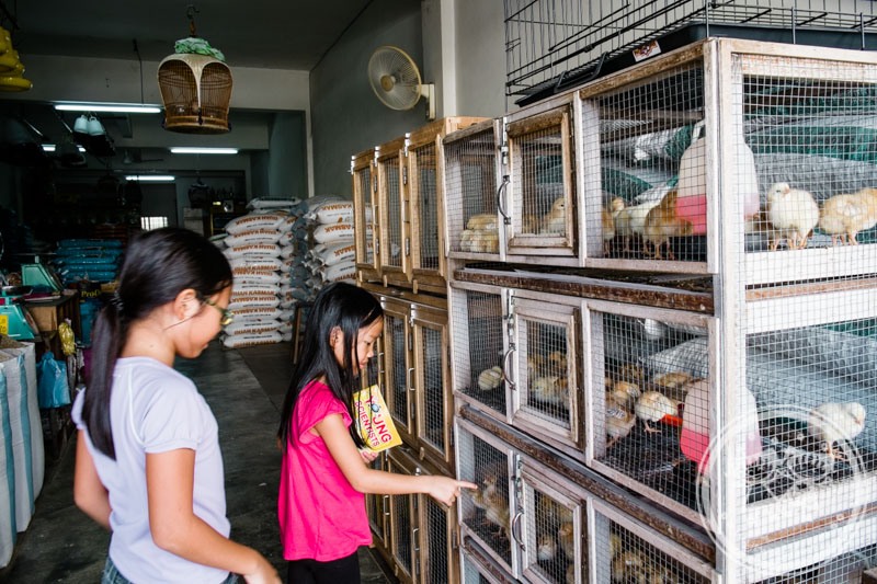 Taiping Town Centre - shop selling chicks