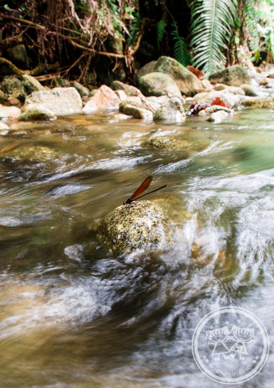 Stream at Sentosa Villa